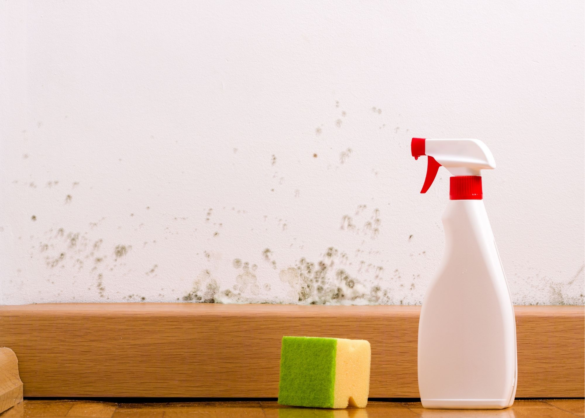 mold removal Chicago Illinois